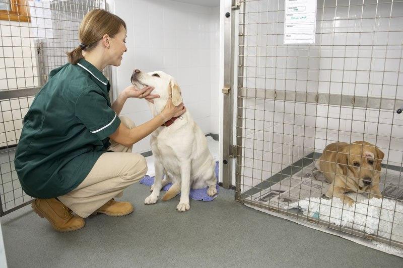 Ветеринарная клиника своими руками